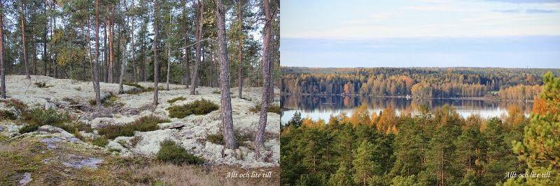 Vitmossa & vy mot Röukas träsk (Bilder: Allt och lite till)